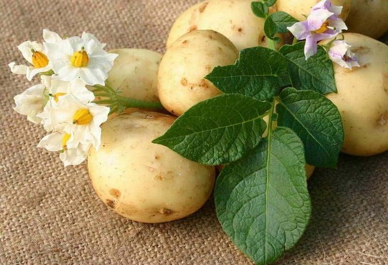 очищение суставов картофелем