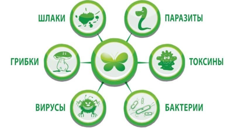 очистить организм от паразитов