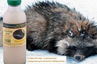 Собачий жир лечит бронхит и туберкулез