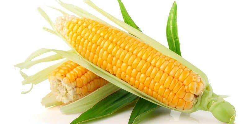 кукурузный крахмал при диете