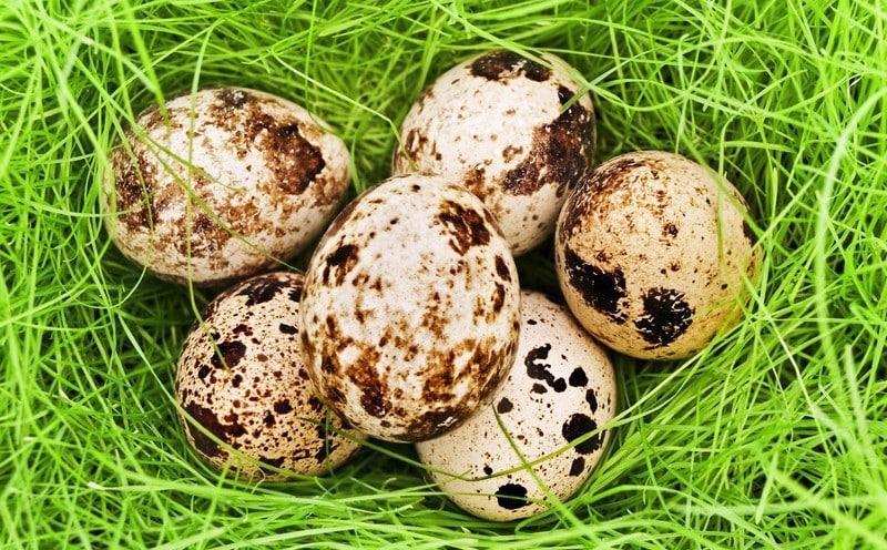 Калорийность перепелиных яиц