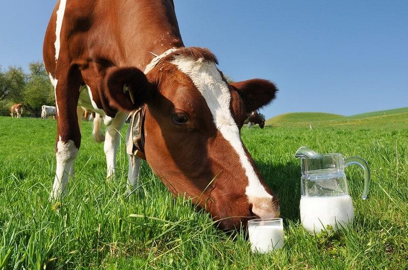 Домашние молоко