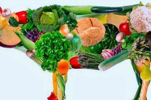 Чем отличаются вегетарианцы, веганы и сыроеды?
