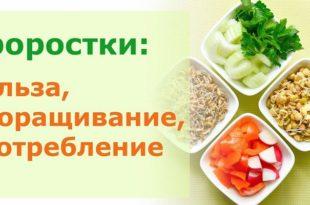 Как правильно проращивать зерно и употреблять в пищу